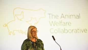 UQ DVCR Bronwyn Harch launches The Animal Welfare Collaborative