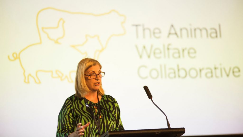 UQ DVCR, Professor Bronwyn Harch, officially inaugurated The Animal Welfare Collaborative (TAWC) at Customs House, Brisbane, on 4 December 2019. Photo: Cameron Neville.